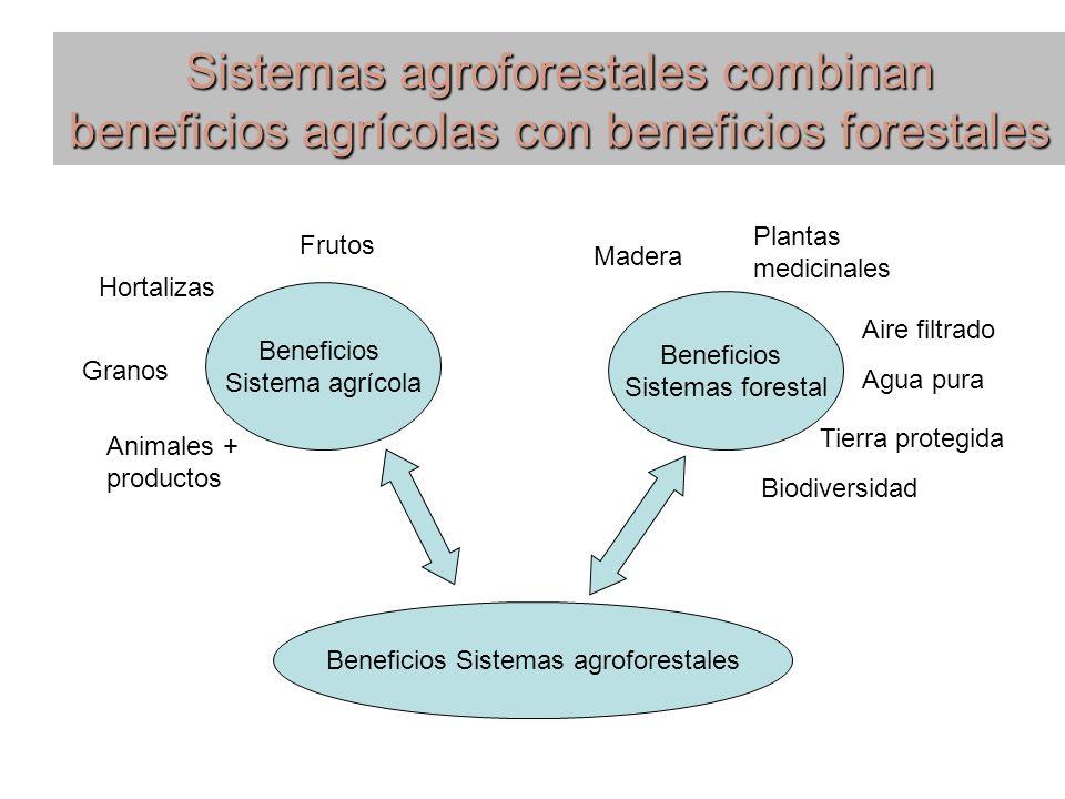 Sistemas agroforestales combinan beneficios agrícolas con beneficios forestales Beneficios Sistema agrícola Beneficios Sistemas forestal Frutos Hortal