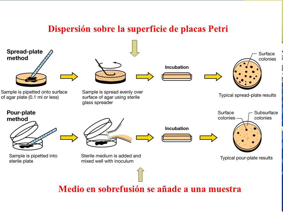 Dispersión sobre la superficie de placas Petri Medio en sobrefusión se añade a una muestra