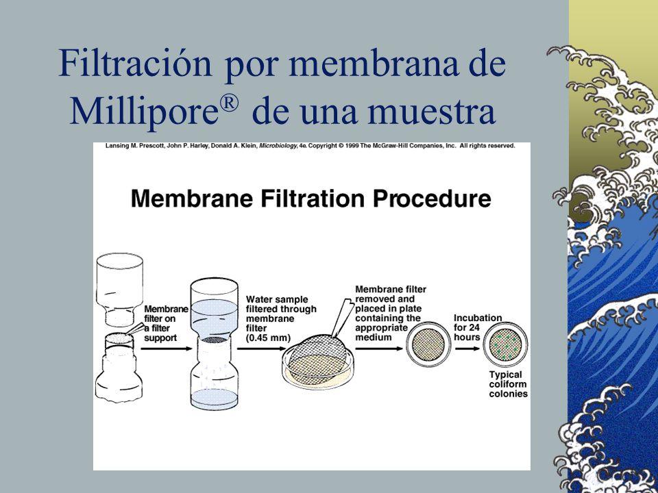 Filtración por membrana de Millipore ® de una muestra