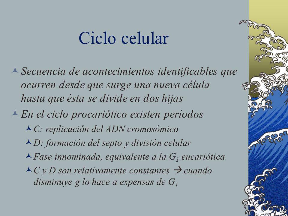 Ciclo celular Secuencia de acontecimientos identificables que ocurren desde que surge una nueva célula hasta que ésta se divide en dos hijas En el cic
