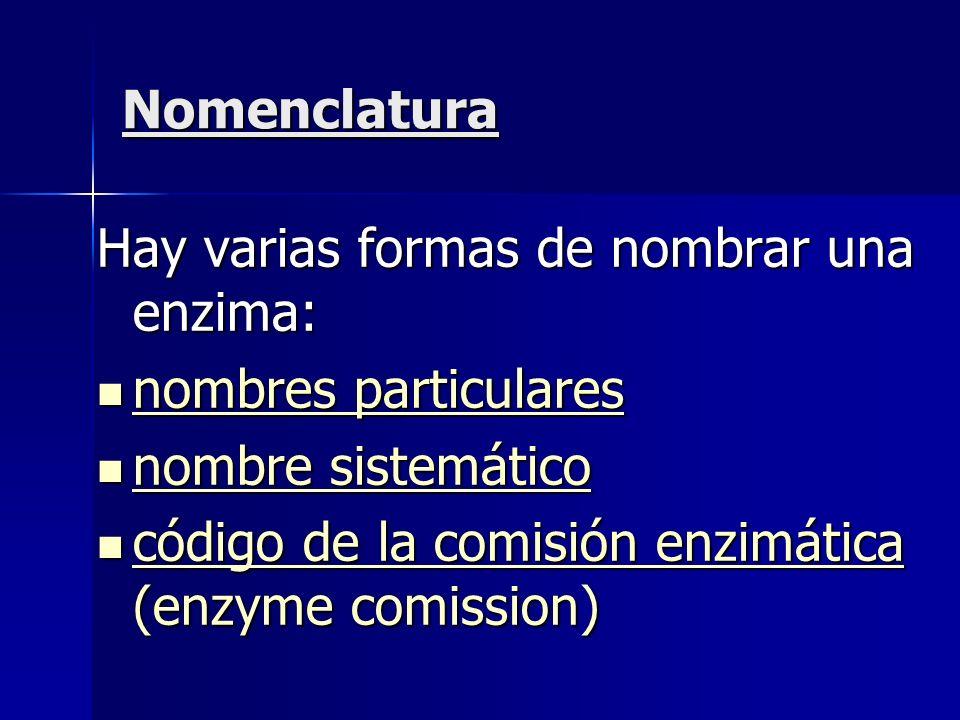 Nomenclatura Hay varias formas de nombrar una enzima: nombres particulares nombres particulares nombres particulares nombres particulares nombre siste