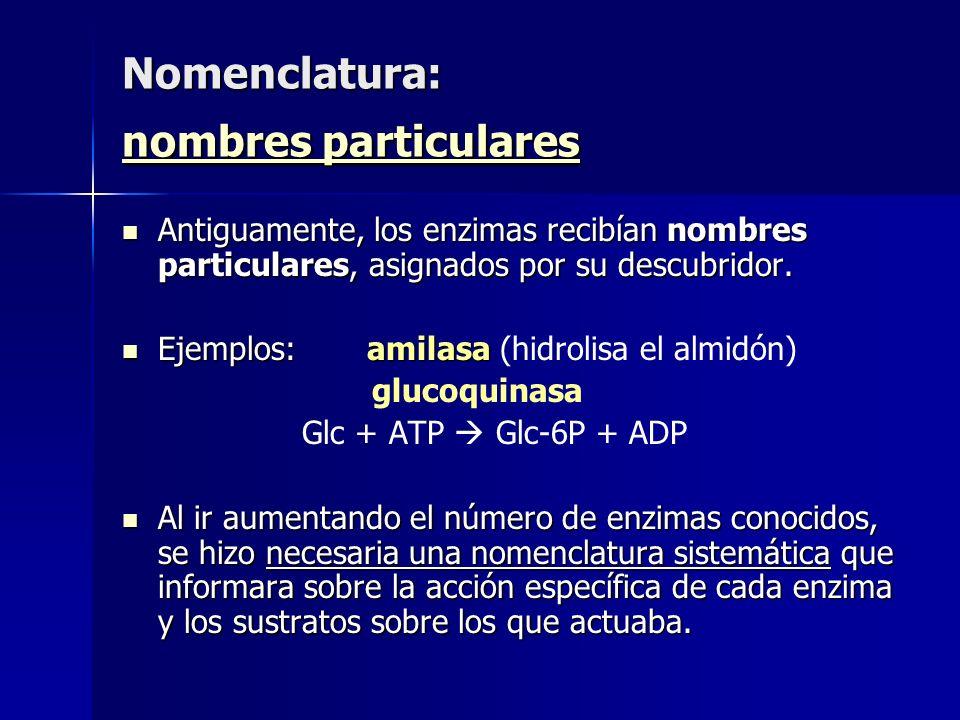 Nomenclatura: nombres particulares nombres particulares nombres particulares Antiguamente, los enzimas recibían nombres particulares, asignados por su