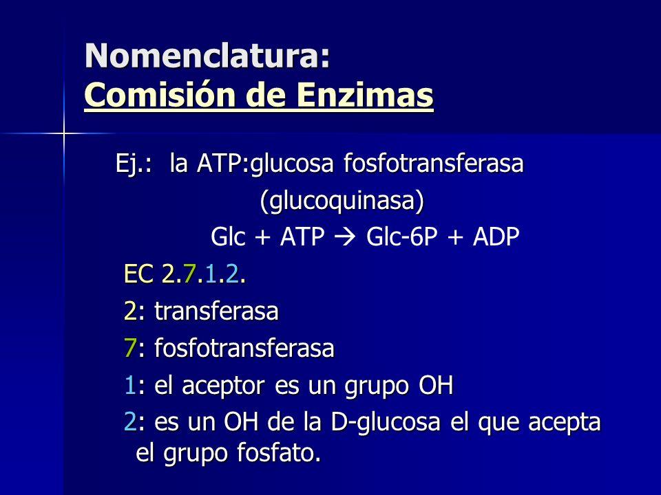 Ej.: la ATP:glucosa fosfotransferasa (glucoquinasa) (glucoquinasa) Glc + ATP Glc-6P + ADP EC 2.7.1.2. EC 2.7.1.2. 2: transferasa 2: transferasa 7: fos