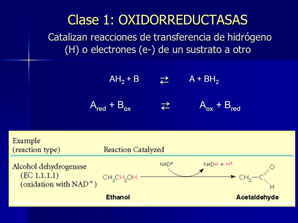 Clase 1: OXIDORREDUCTASAS Catalizan reacciones de transferencia de hidrógeno (H) o electrones (e-) de un sustrato a otro AH 2 + B A + BH 2 A red + B o
