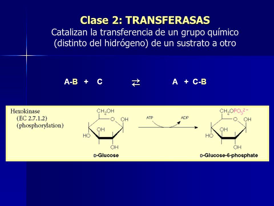 Clase 2: TRANSFERASAS Clase 2: TRANSFERASAS Catalizan la transferencia de un grupo químico (distinto del hidrógeno) de un sustrato a otro A-B + C A +