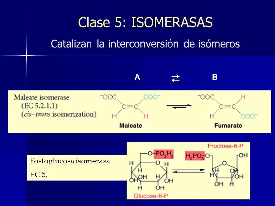Clase 5: ISOMERASAS Catalizan la interconversión de isómeros A B Fosfoglucosa isomerasa EC 5.