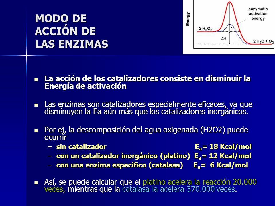 MODO DE ACCIÓN DE LAS ENZIMAS La acción de los catalizadores consiste en disminuir la Energía de activación La acción de los catalizadores consiste en