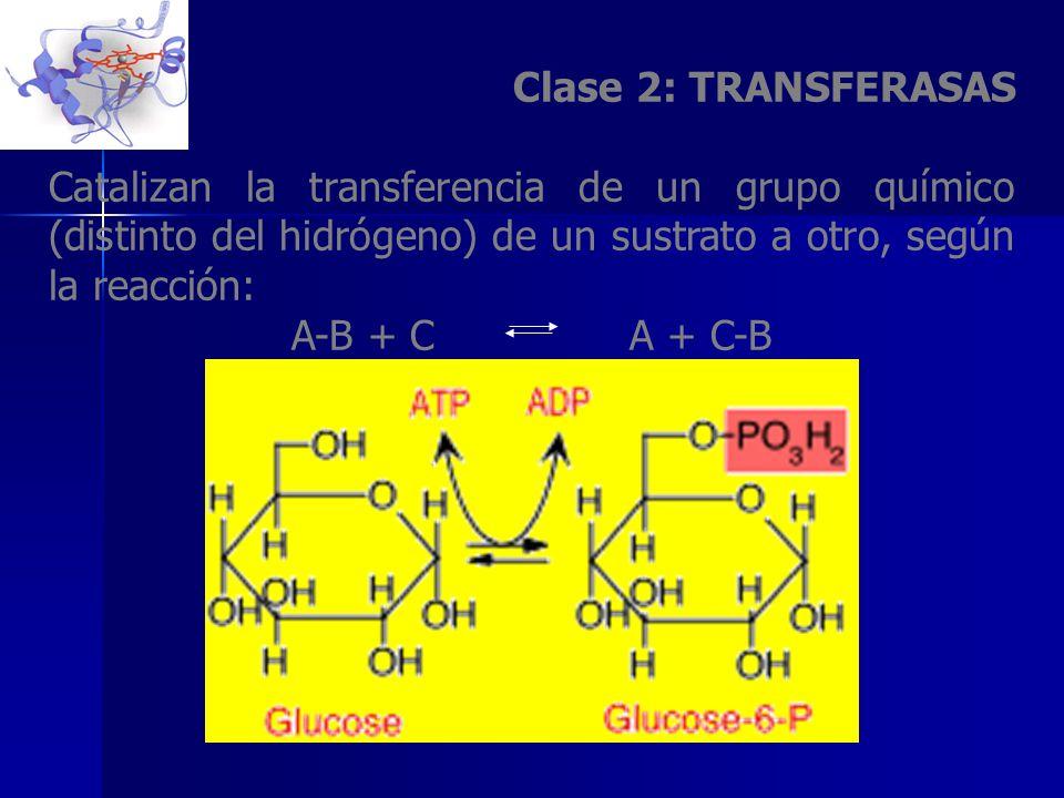 Clase 2: TRANSFERASAS Catalizan la transferencia de un grupo químico (distinto del hidrógeno) de un sustrato a otro, según la reacción: A-B + C A + C-