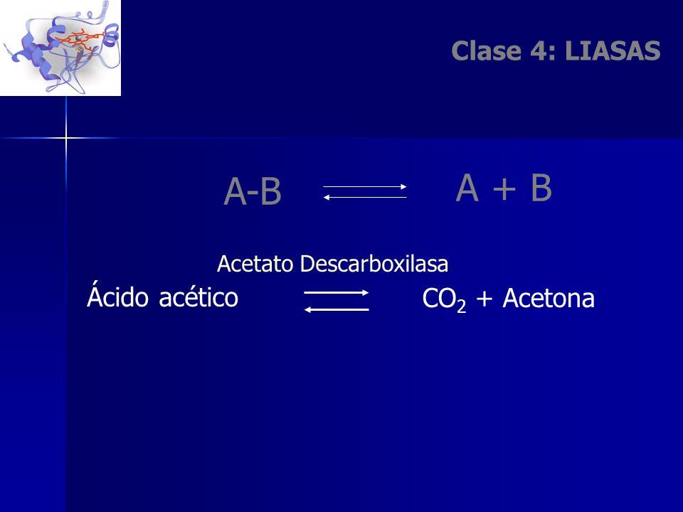 Clase 4: LIASAS A + B A-B CO 2 + Acetona Ácido acético Acetato Descarboxilasa