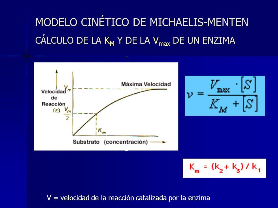 MODELO CINÉTICO DE MICHAELIS-MENTEN CÁLCULO DE LA K M Y DE LA V max DE UN ENZIMA = v3 = k3 [ES] == v3 = k3 [ES] = V = velocidad de la reacción cataliz