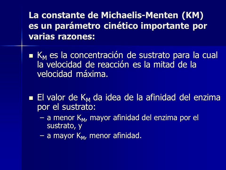 La constante de Michaelis-Menten (KM) es un parámetro cinético importante por varias razones: K M es la concentración de sustrato para la cual la velo