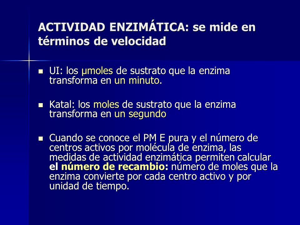 ACTIVIDAD ENZIMÁTICA: se mide en términos de velocidad UI: los µmoles de sustrato que la enzima transforma en un minuto. UI: los µmoles de sustrato qu
