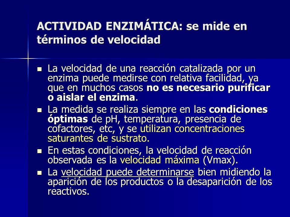 ACTIVIDAD ENZIMÁTICA: se mide en términos de velocidad La velocidad de una reacción catalizada por un enzima puede medirse con relativa facilidad, ya