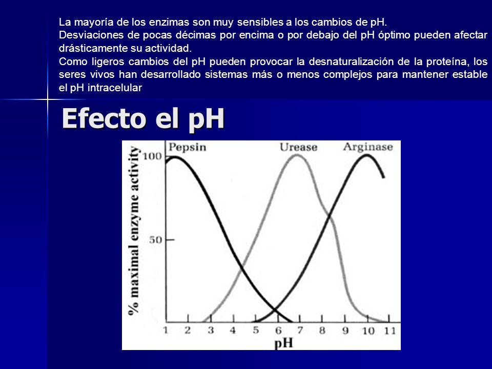 Efecto el pH La mayoría de los enzimas son muy sensibles a los cambios de pH. Desviaciones de pocas décimas por encima o por debajo del pH óptimo pued