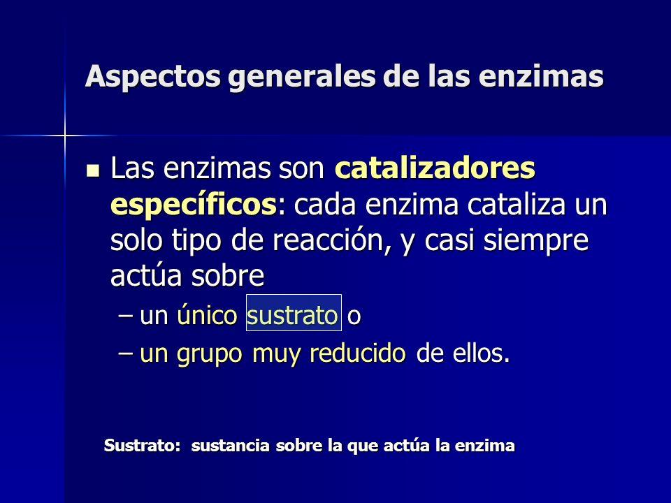Aspectos generales de las enzimas Las enzimas son catalizadores específicos: cada enzima cataliza un solo tipo de reacción, y casi siempre actúa sobre