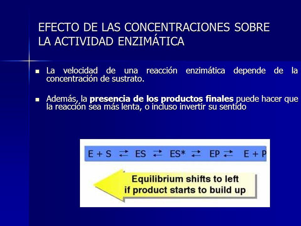 EFECTO DE LAS CONCENTRACIONES SOBRE LA ACTIVIDAD ENZIMÁTICA La velocidad de una reacción enzimática depende de la concentración de sustrato. La veloci