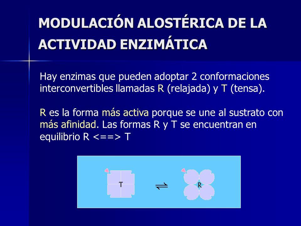 MODULACIÓN ALOSTÉRICA DE LA ACTIVIDAD ENZIMÁTICA Hay enzimas que pueden adoptar 2 conformaciones interconvertibles llamadas R (relajada) y T (tensa).