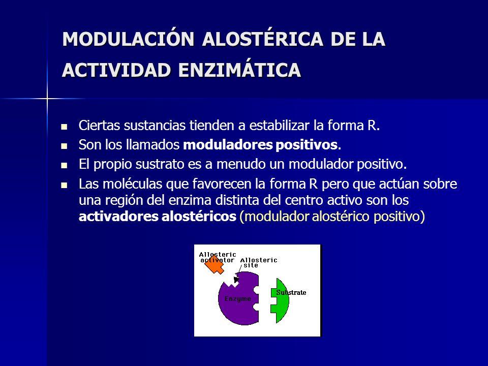 MODULACIÓN ALOSTÉRICA DE LA ACTIVIDAD ENZIMÁTICA Ciertas sustancias tienden a estabilizar la forma R. Son los llamados moduladores positivos. El propi
