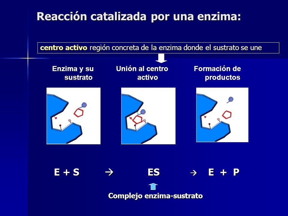 Clase 3: HIDROLASAS AH + B-OH A-B + H 2 O glucosa + galactosa lactosa + agua LACTASA