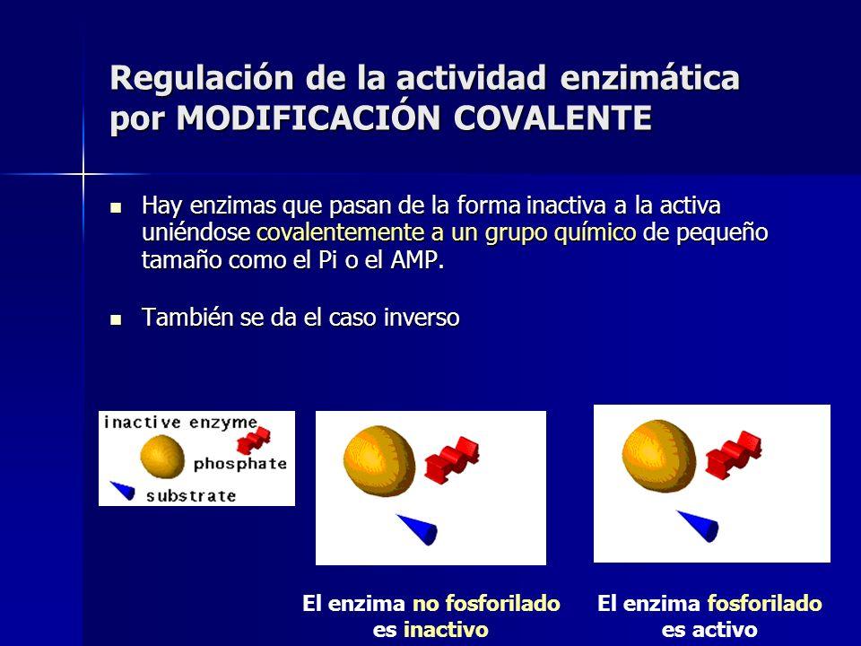 Regulación de la actividad enzimática por MODIFICACIÓN COVALENTE Hay enzimas que pasan de la forma inactiva a la activa uniéndose covalentemente a un