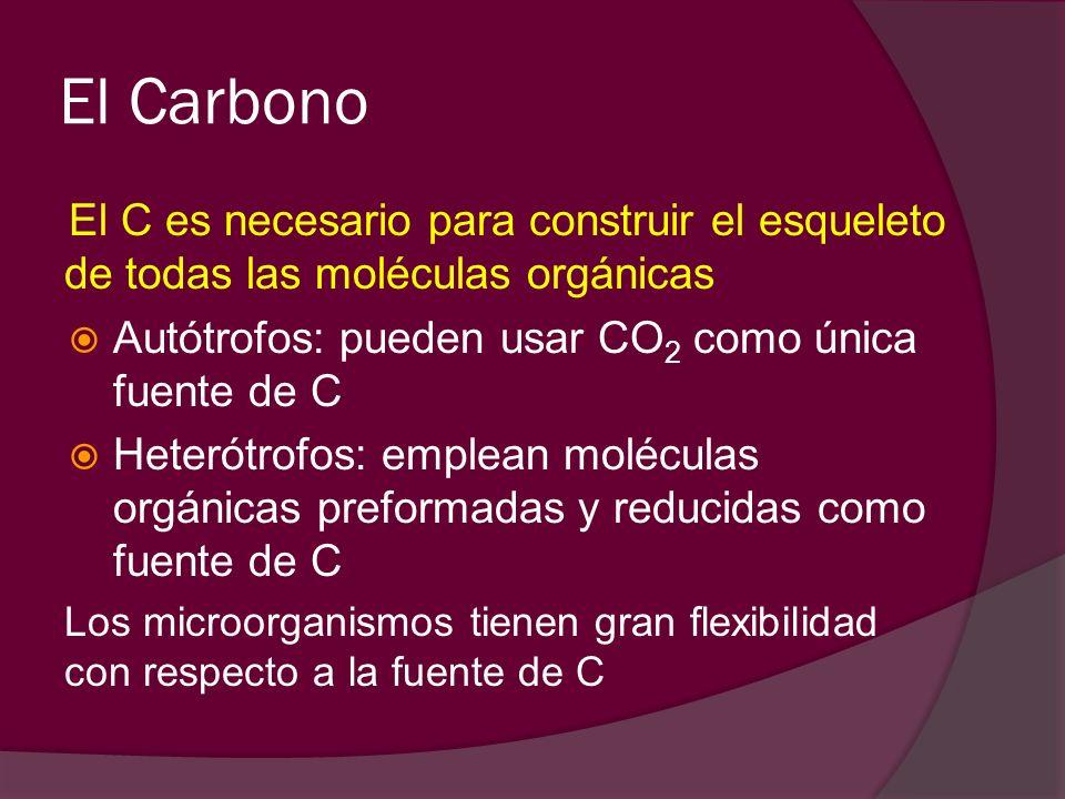 El Carbono El C es necesario para construir el esqueleto de todas las moléculas orgánicas Autótrofos: pueden usar CO 2 como única fuente de C Heterótr