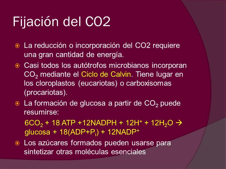 Fijación del CO2 La reducción o incorporación del CO2 requiere una gran cantidad de energía. Casi todos los autótrofos microbianos incorporan CO 2 med