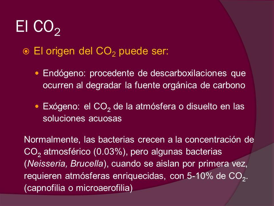 El CO 2 El origen del CO 2 puede ser: Endógeno: procedente de descarboxilaciones que ocurren al degradar la fuente orgánica de carbono Exógeno: el CO