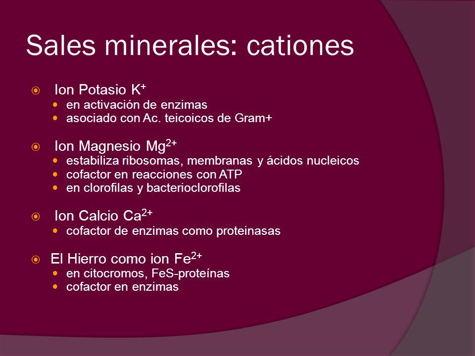 Sales minerales: cationes Ion Potasio K + en activación de enzimas asociado con Ac. teicoicos de Gram+ Ion Magnesio Mg 2+ estabiliza ribosomas, membra