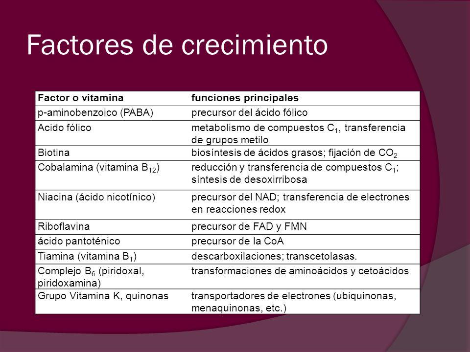 Factor o vitaminafunciones principales p-aminobenzoico (PABA)precursor del ácido fólico Acido fólicometabolismo de compuestos C 1, transferencia de gr