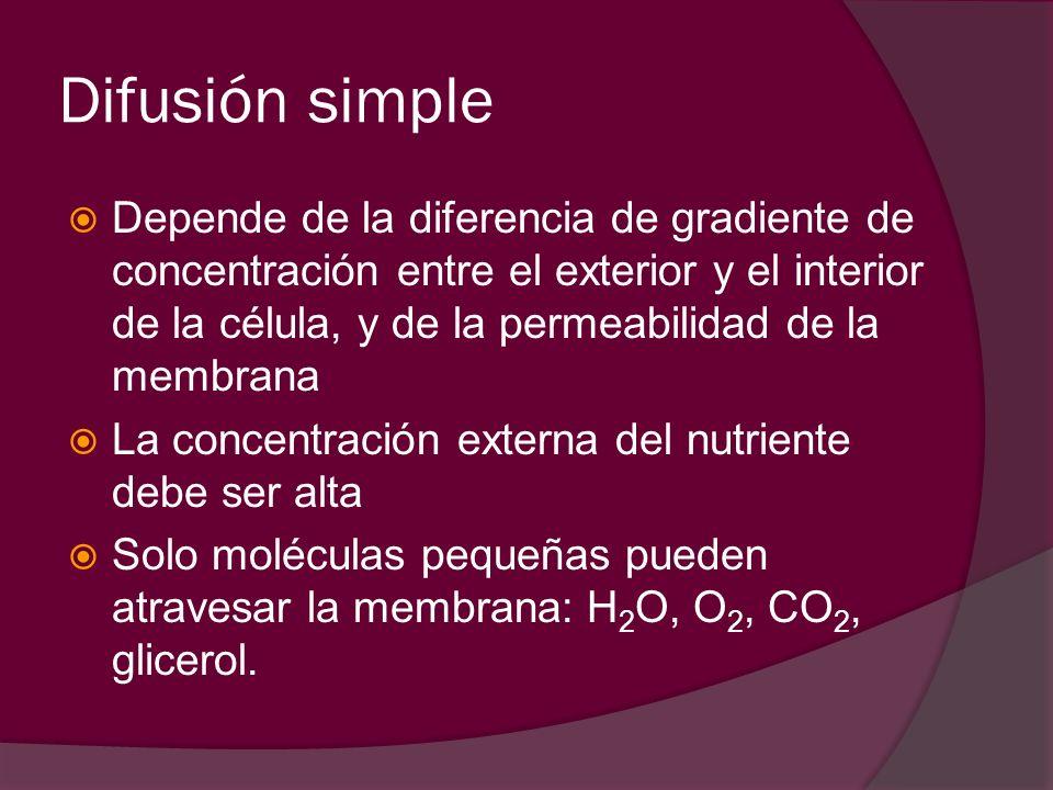 Difusión simple Depende de la diferencia de gradiente de concentración entre el exterior y el interior de la célula, y de la permeabilidad de la membr
