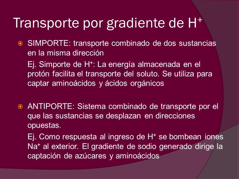 Transporte por gradiente de H + SIMPORTE: transporte combinado de dos sustancias en la misma dirección Ej. Simporte de H + : La energía almacenada en