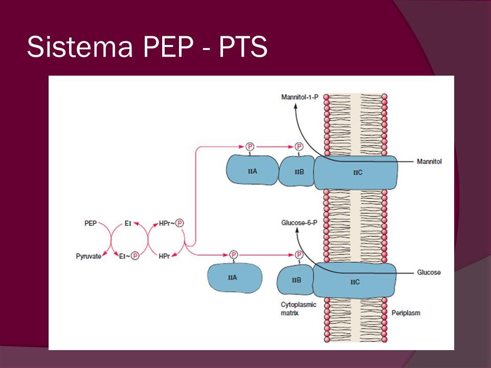 Sistema PEP - PTS