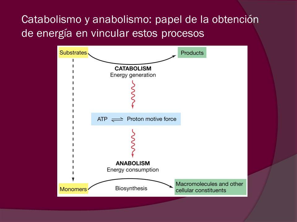 Catabolismo y anabolismo: papel de la obtención de energía en vincular estos procesos