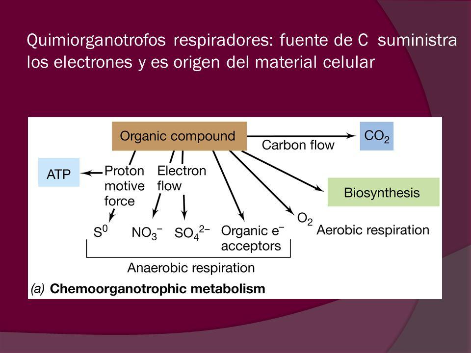 Quimiorganotrofos respiradores: fuente de C suministra los electrones y es origen del material celular