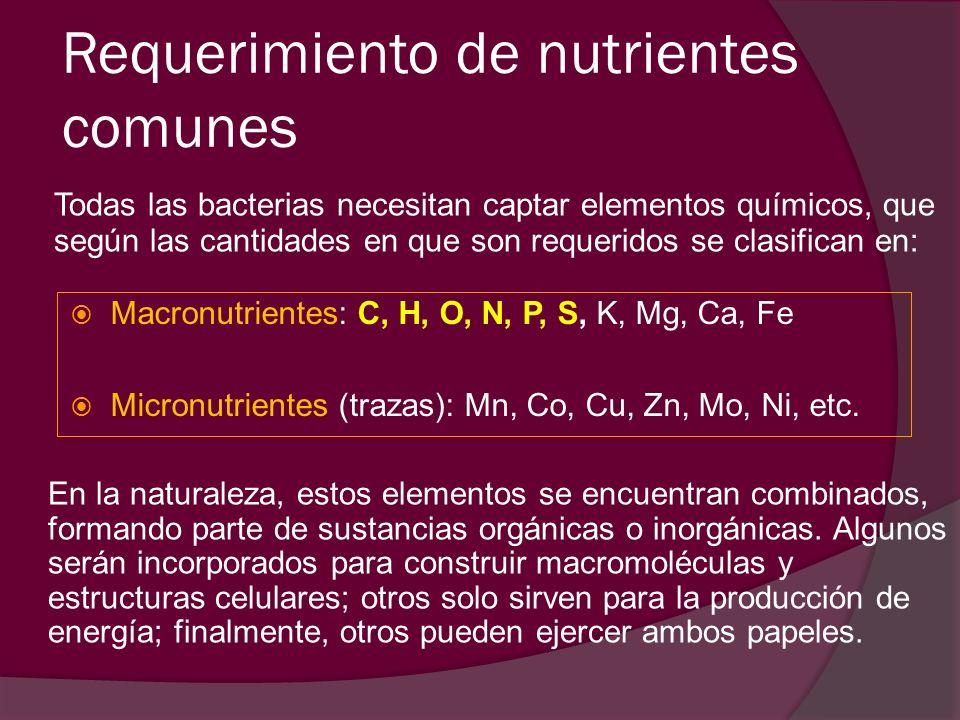 Requerimiento de nutrientes comunes Todas las bacterias necesitan captar elementos químicos, que según las cantidades en que son requeridos se clasifi