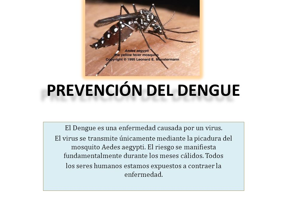 PREVENCIÓN DEL DENGUE El Dengue es una enfermedad causada por un virus. El virus se transmite únicamente mediante la picadura del mosquito Aedes aegyp