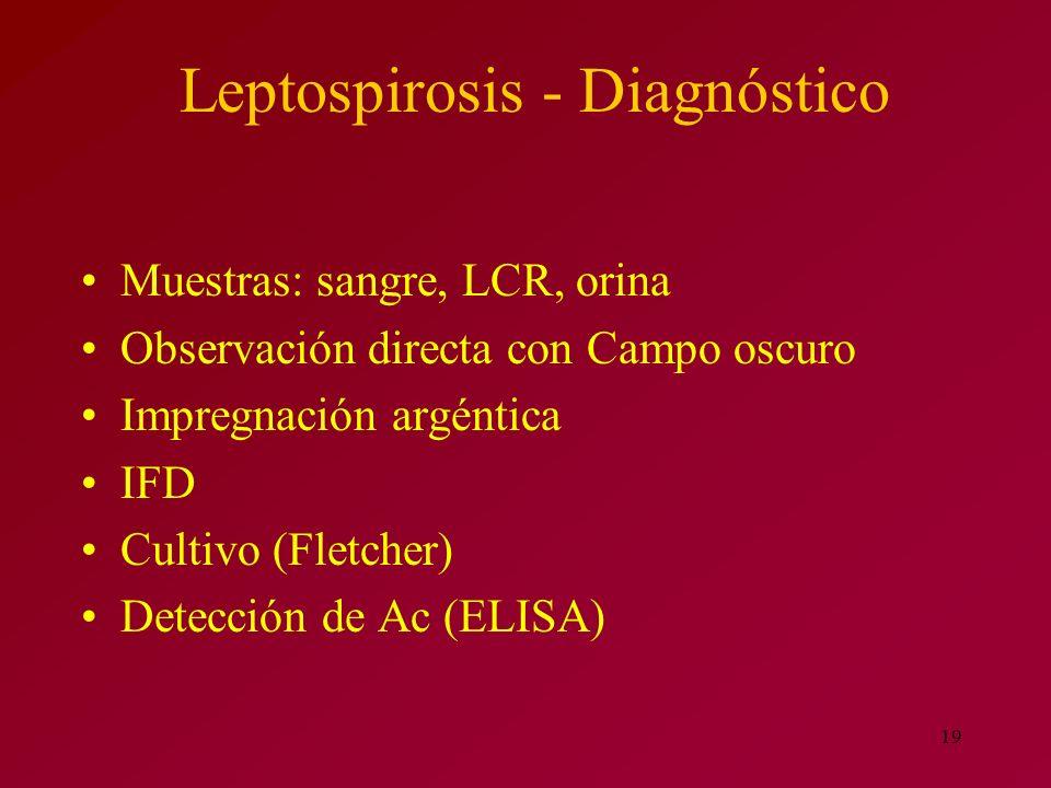 19 Muestras: sangre, LCR, orina Observación directa con Campo oscuro Impregnación argéntica IFD Cultivo (Fletcher) Detección de Ac (ELISA) Leptospiros