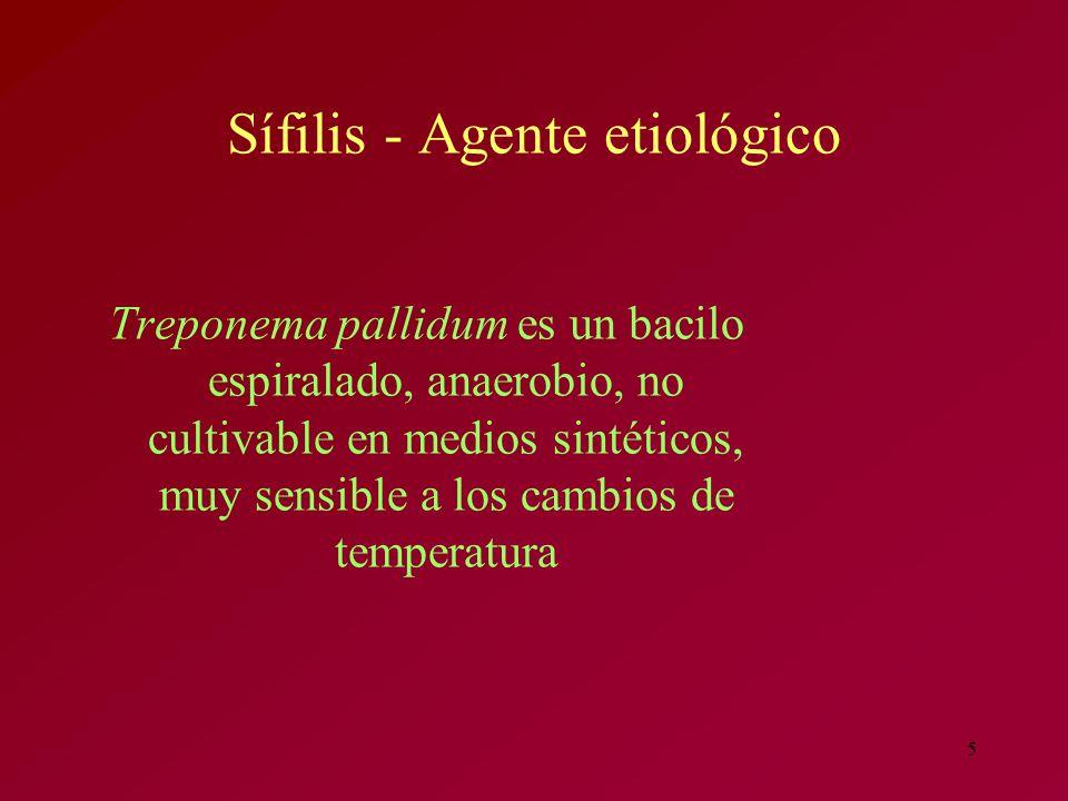 5 Sífilis - Agente etiológico Treponema pallidum es un bacilo espiralado, anaerobio, no cultivable en medios sintéticos, muy sensible a los cambios de