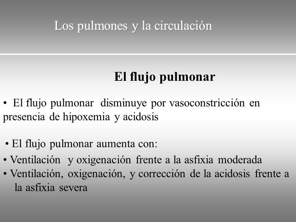 El flujo pulmonar disminuye por vasoconstricción en presencia de hipoxemia y acidosis El flujo pulmonar aumenta con: Ventilación y oxigenación frente