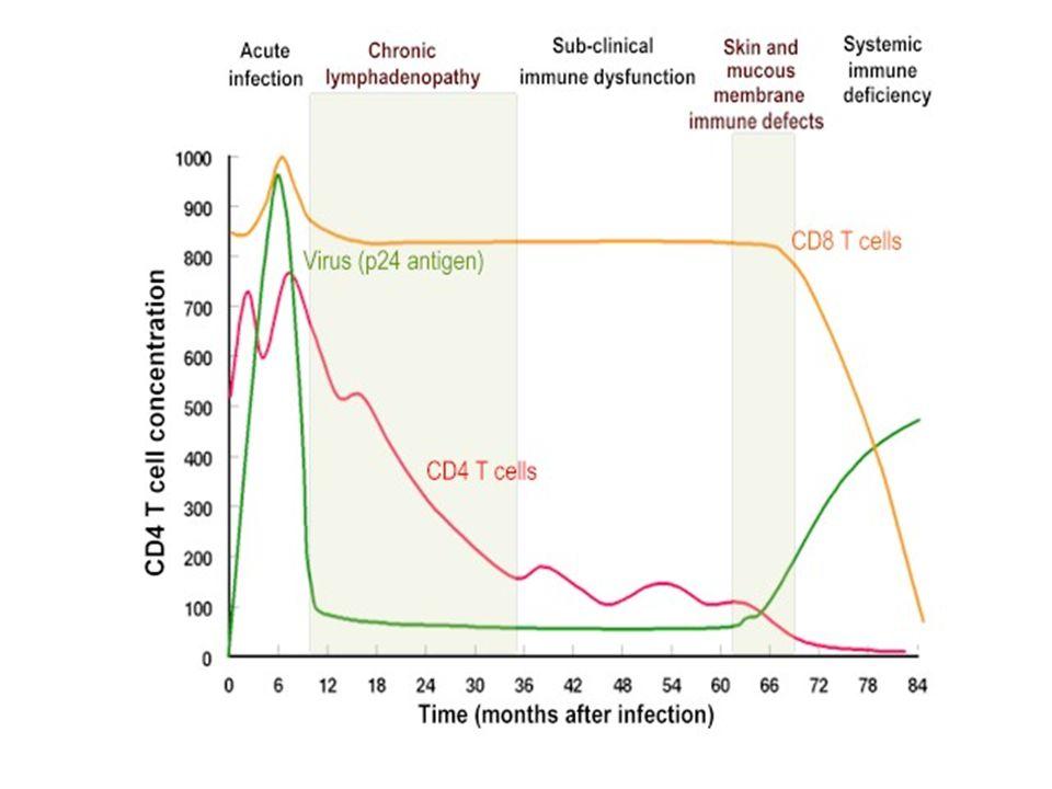 PERÍODO ASINTOMÁTICO Las células T CD4(+) decrecen lenta y paulatinamente. Las células T CD4(+) decrecen lenta y paulatinamente. Se identifican anticu
