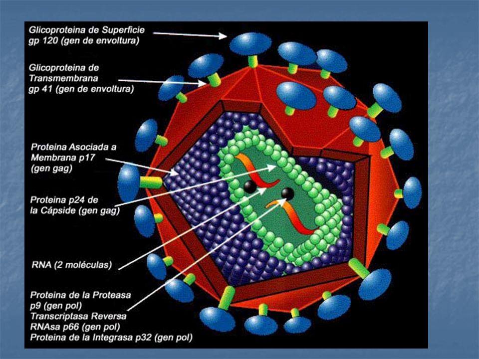 Familia Retroviridae Familia Retroviridae Subfamilia Lentivirinae Subfamilia Lentivirinae Partícula esférica de 100 – 110 nm Partícula esférica de 100