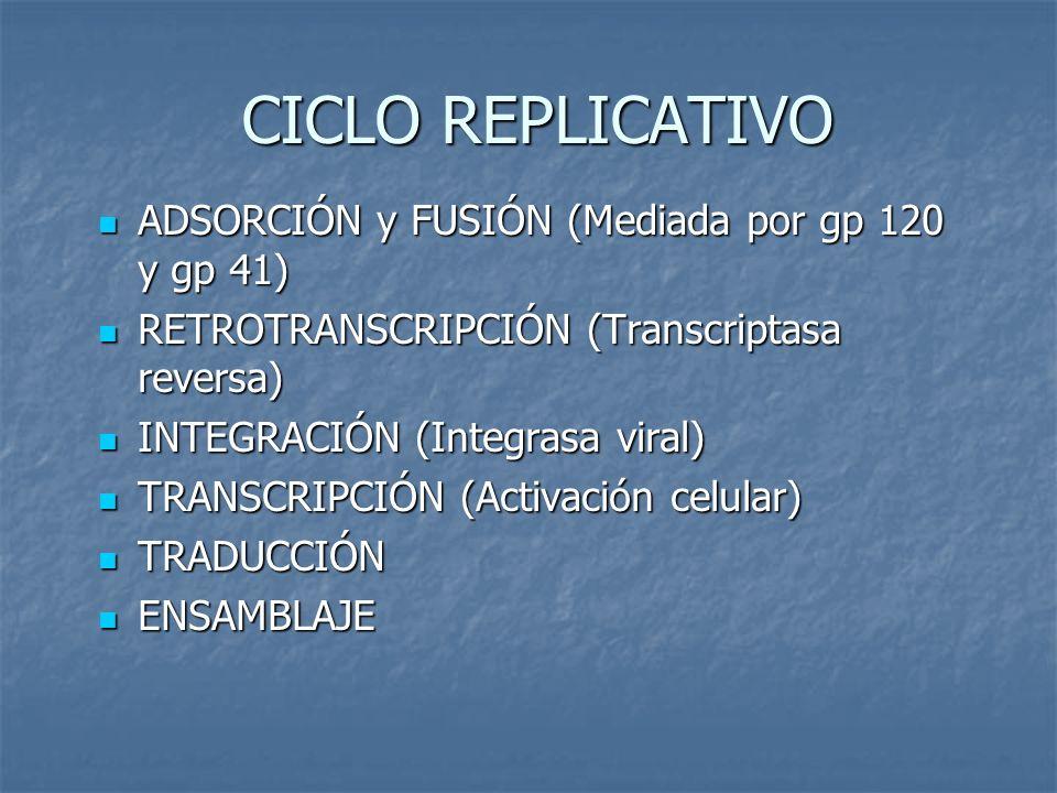 CICLO REPLICATIVO ADSORCIÓN y FUSIÓN (Mediada por gp 120 y gp 41) ADSORCIÓN y FUSIÓN (Mediada por gp 120 y gp 41) RETROTRANSCRIPCIÓN (Transcriptasa re