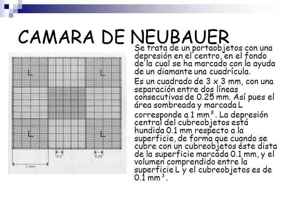 CAMARA DE NEUBAUER Se trata de un portaobjetos con una depresión en el centro, en el fondo de la cual se ha marcado con la ayuda de un diamante una cu