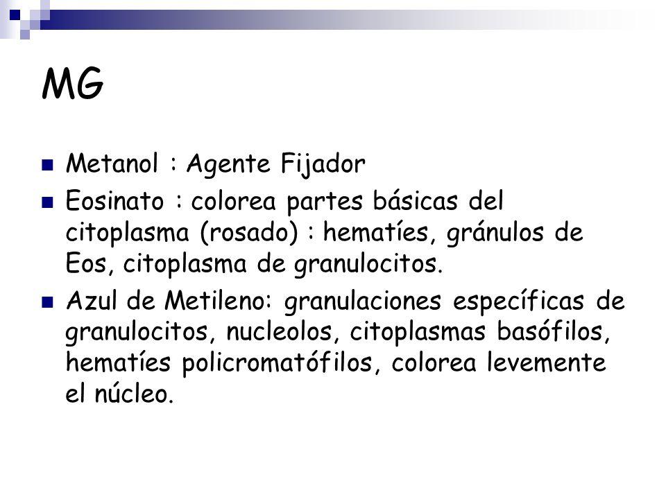 MG Metanol : Agente Fijador Eosinato : colorea partes básicas del citoplasma (rosado) : hematíes, gránulos de Eos, citoplasma de granulocitos. Azul de