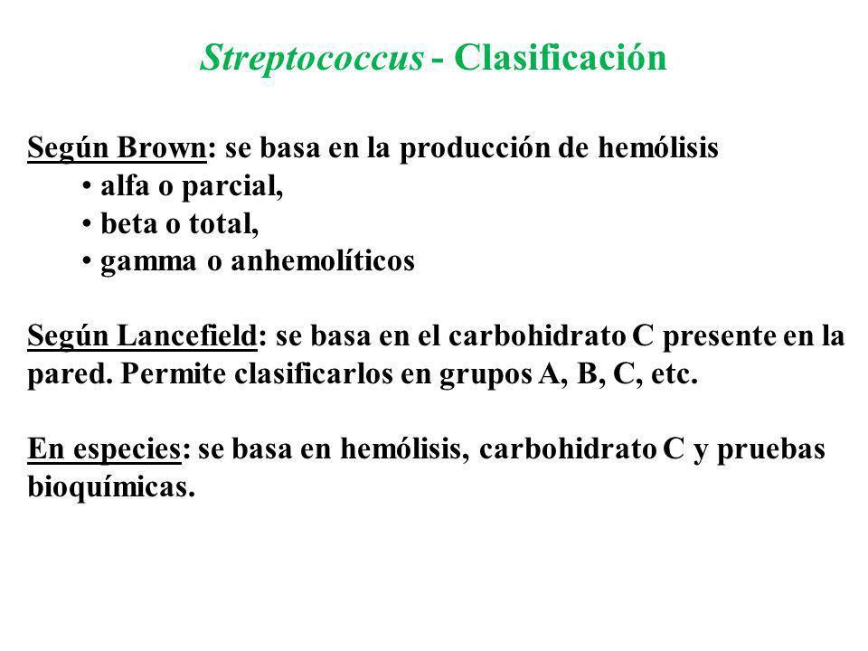 Streptococcus - Clasificación Según Brown: se basa en la producción de hemólisis alfa o parcial, beta o total, gamma o anhemolíticos Según Lancefield: