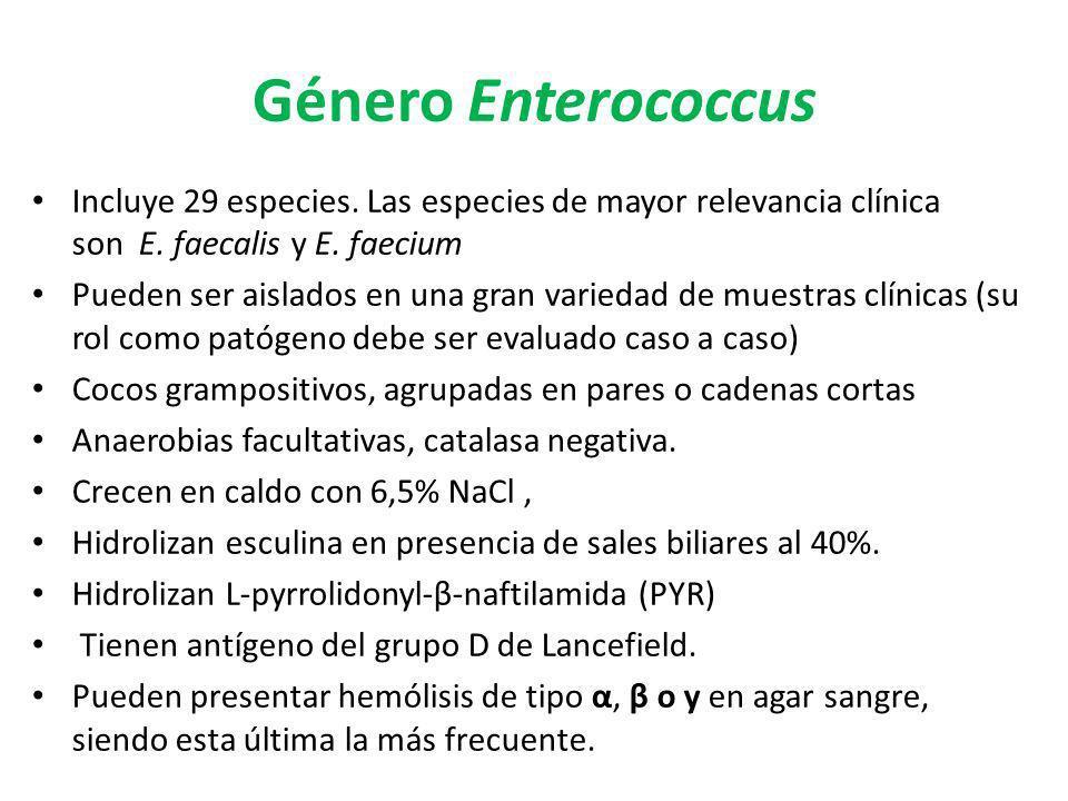 Género Enterococcus Incluye 29 especies. Las especies de mayor relevancia clínica son E. faecalis y E. faecium Pueden ser aislados en una gran varieda