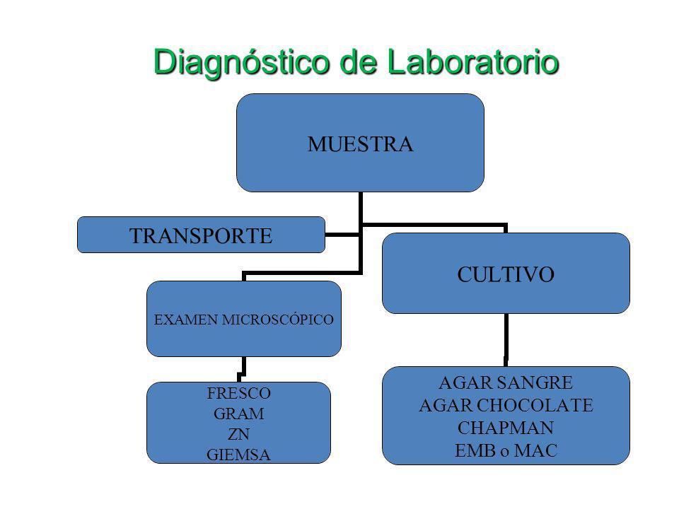 Diagnóstico de Laboratorio MUESTRA EXAMEN MICROSCÓPICO FRESCO GRAM ZN GIEMSA CULTIVO AGAR SANGRE AGAR CHOCOLATE CHAPMAN EMB o MAC TRANSPORTE