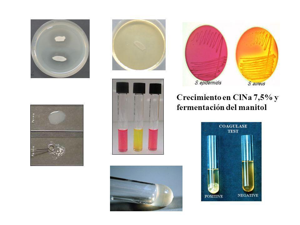 Crecimiento en ClNa 7,5% y fermentación del manitol