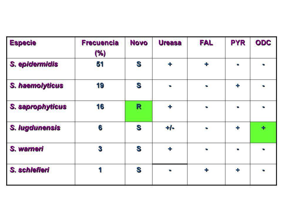 EspecieFrecuencia(%)NovoUreasaFALPYRODC S. epidermidis 51S++-- S. haemolyticus 19S--+- S. saprophyticus 16R+--- S. lugdunensis 6S+/--++ S. warneri 3S+