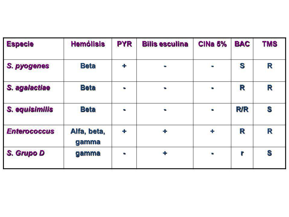 EspecieHemólisisPYR Bilis esculina ClNa 5% BACTMS S. pyogenes Beta+--SR S. agalactiae Beta---RR S. equisimilis Beta---R/RS Enterococcus Alfa, beta, ga